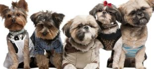 The Best Ideas of Fashion For Dog Dress