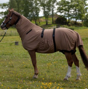 fly-protection-for-horses
