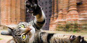 10 Funny Cats