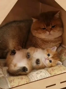 funnt cats
