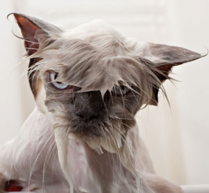 10 wet funny cats