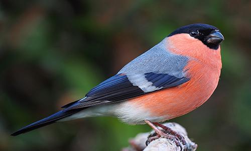 A Brief Description About Finch