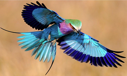 About the World's Exotic Birds