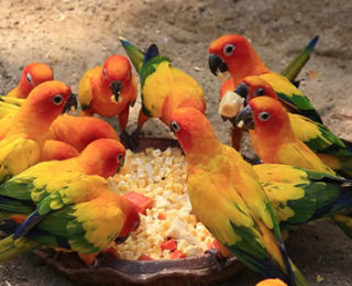 Beautiful Conure Parrot