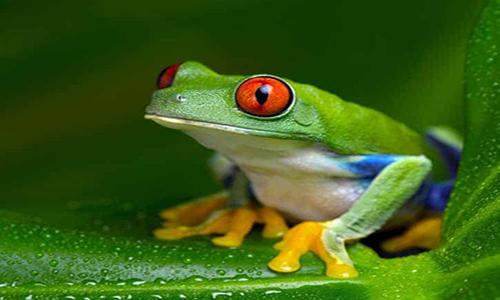 Frog Names