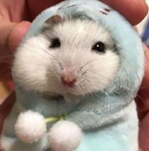 hamster lifespan
