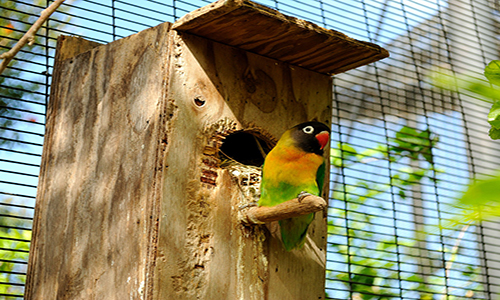 How To Build a Lovebirds House