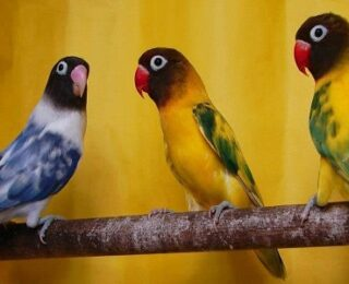 How To Cure Lovebirds Diseases