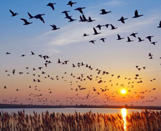Know More about Migrating Birds