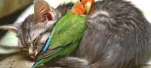 Parrots as Pets