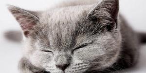 10 Cute Sleeping Cats