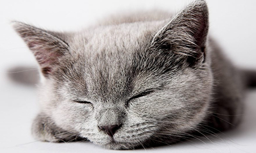 10 Cute Sleeping Cats