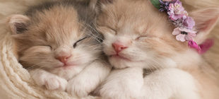 Why Do Cats Sleep Much