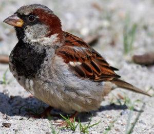 small-bird-sparrows