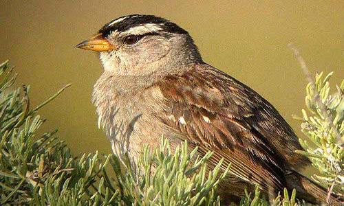 Small Bird Sparrows