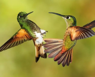 The Small yet Strong Hummingbirds