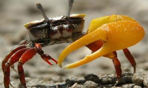Feeding Crab In Aquarium