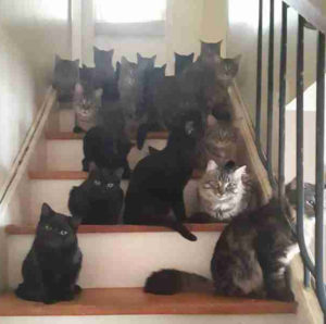merging-cats-cat-and-kitten-in-a-household