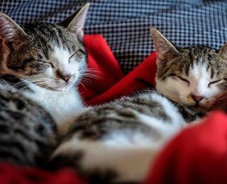 Merging Cats: Cat and Kitten in a Household