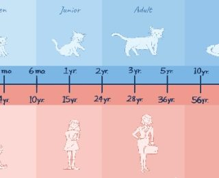 Convert Cat Age to Human Years