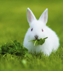 list-of-fresh-food-for-rabbit