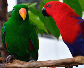 Varieties of Talking Birds and How to Teach Them