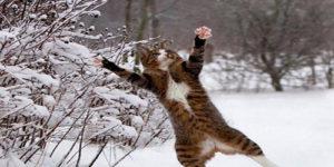 Winter Cat Names