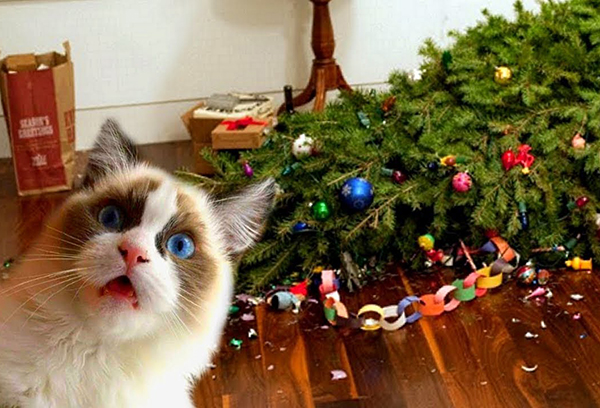 10 Cats Who Love Christmas
