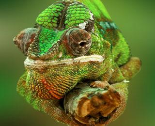 Male Iguana Names