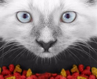 Cat Food Ingredients You've Never Heard Of
