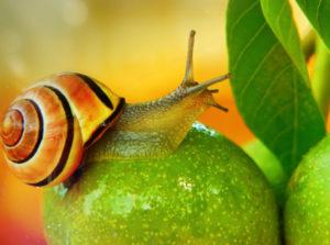 snail-names