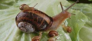 Snail Names