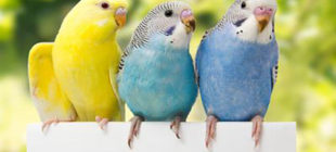 Various Interesting Facts about Birds