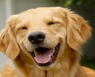Tips for a Long, Happy Dog Life