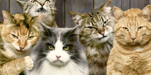 Top 10 Gangster Cats