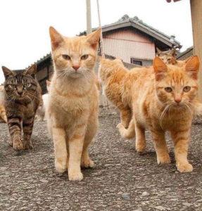 gangster cats