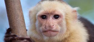 Male Monkey Names