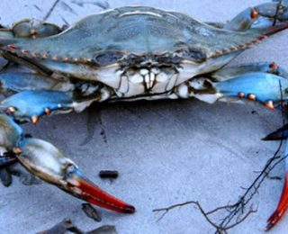 Blue Crab Names