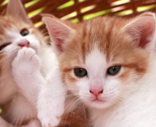 Male Cat Names that Start With the Letter P