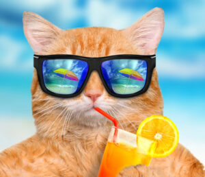 Top 10 Cool Cats