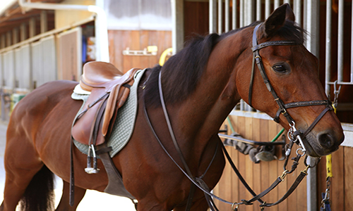 Horse Saddle – The Right Choice And The Right Accessories