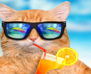 The Best Cool Cat Names