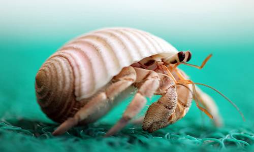 Great Ideas for Hermit Crab Names