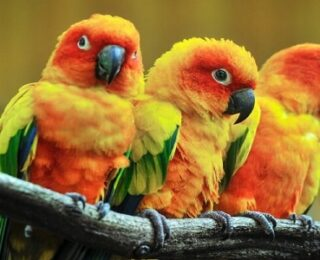 List of Birds in English and Urdu