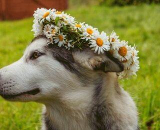 Female Mythical Dog Names