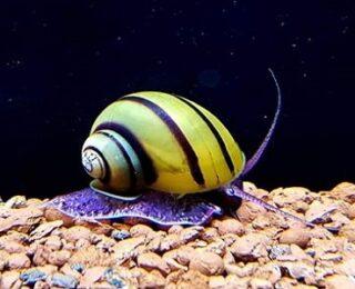 20 Cute Snails