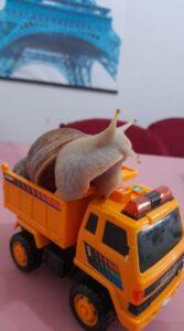 10-cute-snails